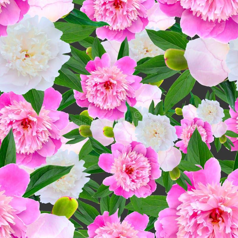 Estampado de flores inconsútil con las peonías rosadas stock de ilustración