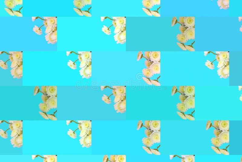 Estampado de flores de una serie de crisantemos en una endecha plana azul de la opinión superior del fondo libre illustration
