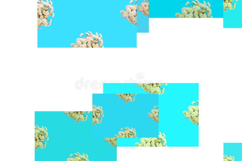 Estampado de flores de una serie de crisantemos en una endecha plana azul de la opinión superior del fondo ilustración del vector