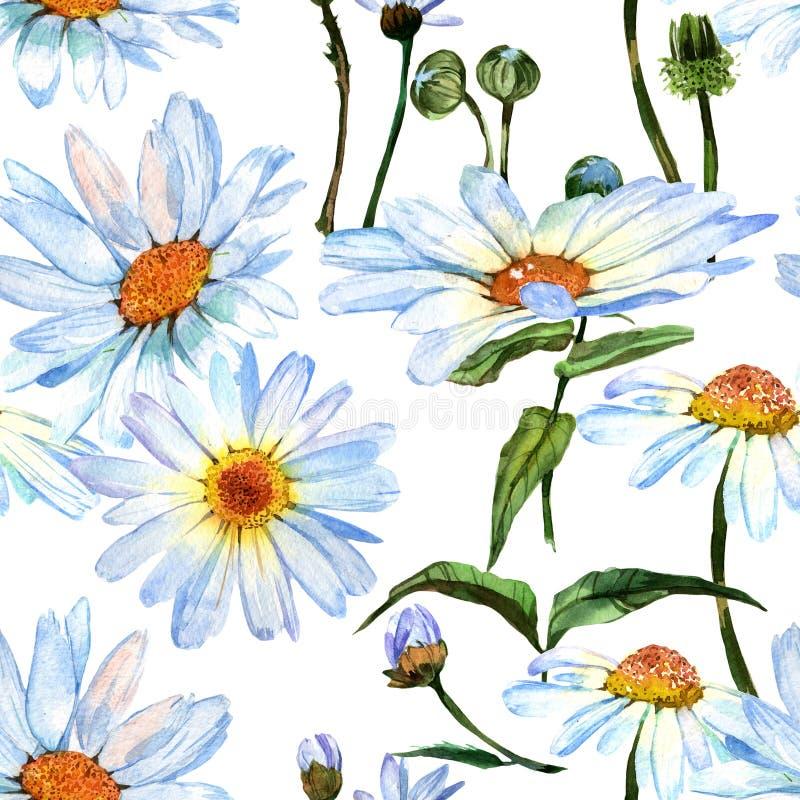 Estampado de plores de la margarita del Wildflower en un estilo de la acuarela stock de ilustración