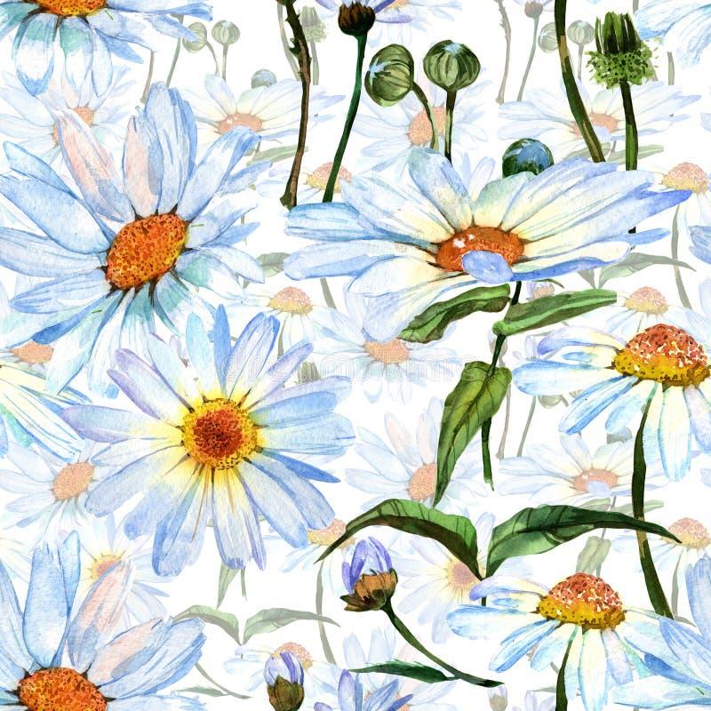 Estampado de plores de la margarita del Wildflower en un estilo de la acuarela ilustración del vector