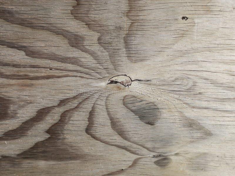 Estampado de plores en tablón de madera múltiplex fotografía de archivo libre de regalías