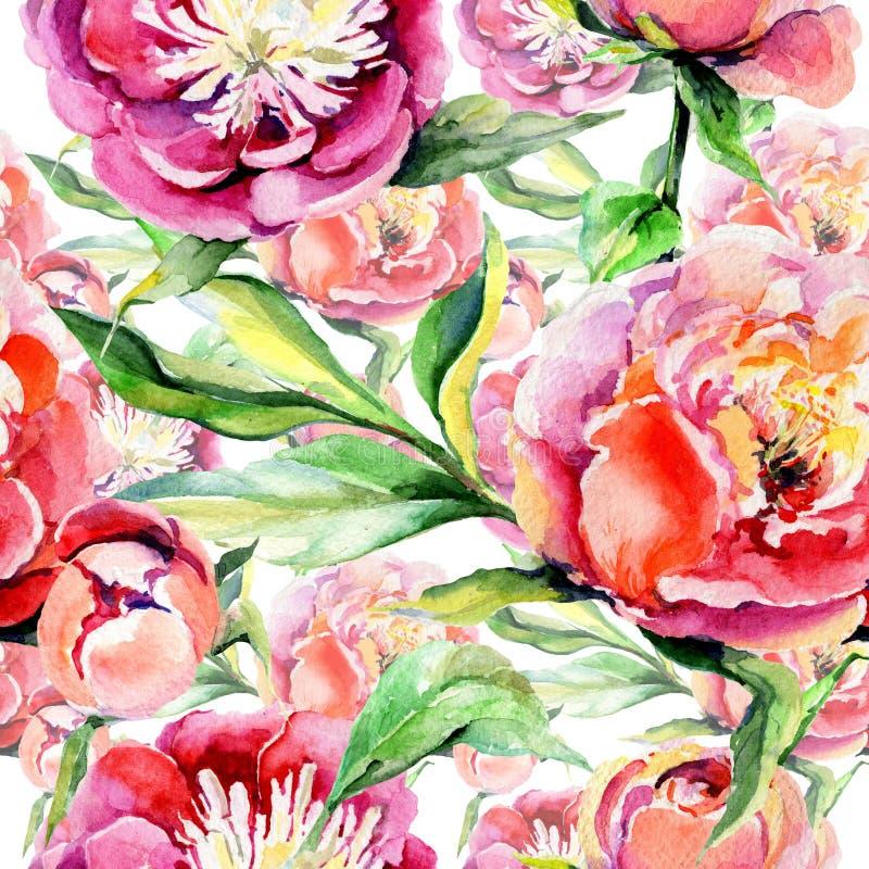 Estampado de plores de la peonía del Wildflower en un estilo de la acuarela stock de ilustración