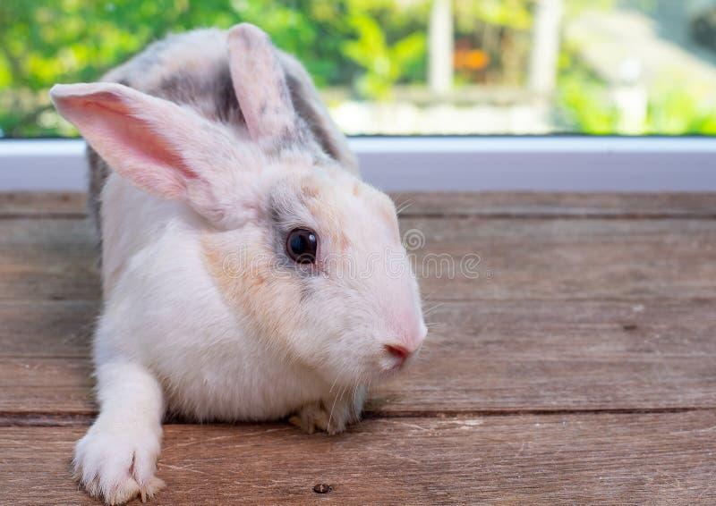 Estancia larga del conejo de conejito de los oídos en la tabla de madera con el fondo del verde y de la naturaleza imagen de archivo