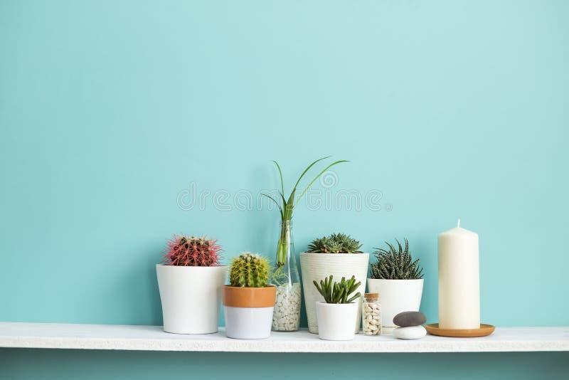 Estante blanco contra la pared en colores pastel de la turquesa con la colecci?n de diverso cactus y de plantas suculentas adentr imagen de archivo