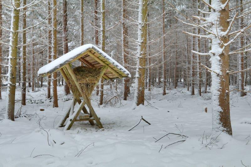 Estante de alimentación del heno en bosque del invierno fotografía de archivo libre de regalías