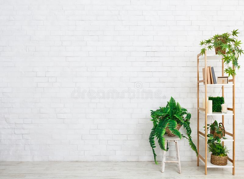 Estante para libros con las plantas imperecederas sobre la pared blanca imagen de archivo