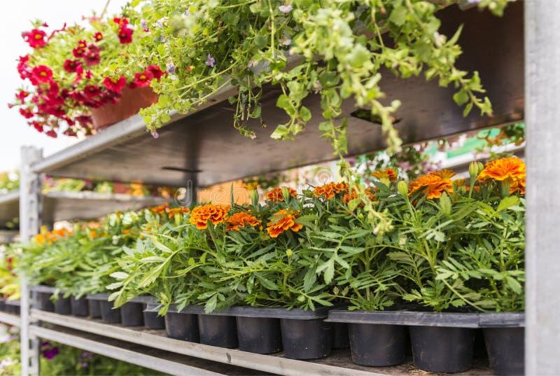 Estantes con diversas flores del jardín en venta fotografía de archivo libre de regalías