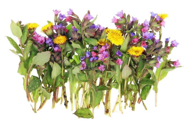 Estas são as flores delicadas selvagens de primeiro abril do europeu imagens de stock royalty free