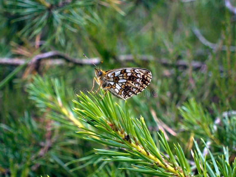 Estate buterfly nella serenità e nell'equilibrio fotografia stock libera da diritti