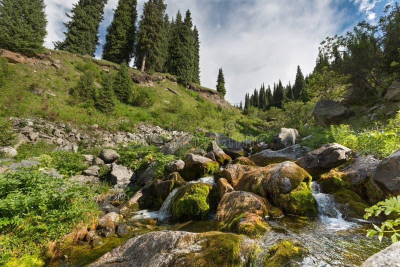 Estate della natura dell'acqua di ruscello del ruscello del paesaggio immagine stock