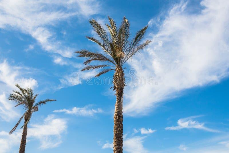 Estate delle nuvole del cielo blu delle palme chiara fotografia stock
