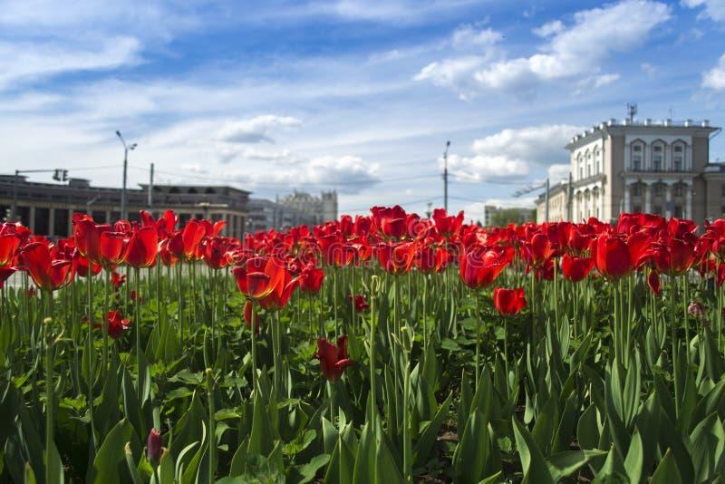 Estate di Kazan Tatarstan fotografie stock libere da diritti