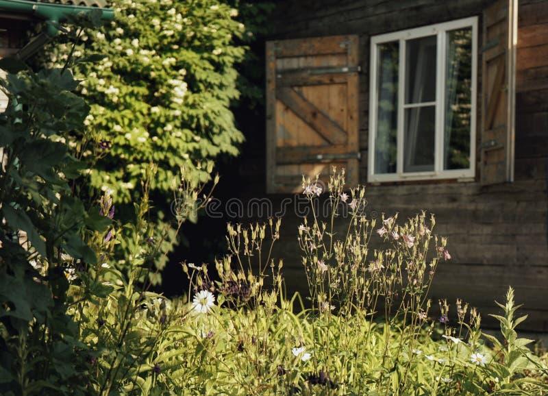 estate di luce solare delle piante verdi del giardino della finestra della casa di legno immagini stock