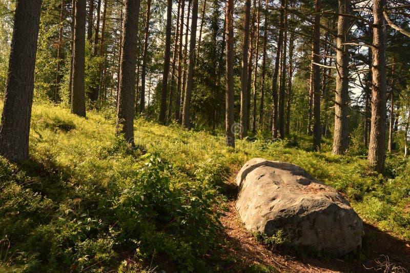 Estate finlandese, Pihtipudas immagine stock libera da diritti
