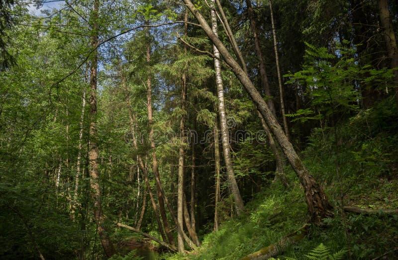 Estate in foresta fotografia stock