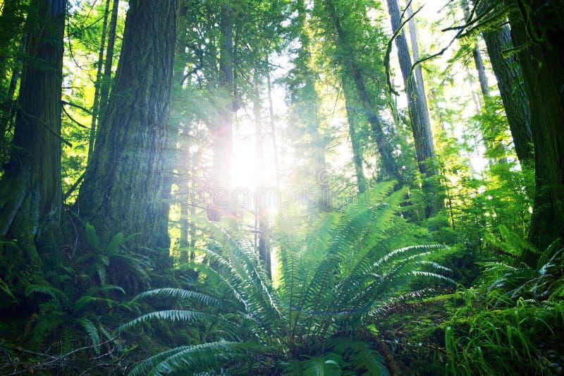 Estate in foresta pluviale immagine stock
