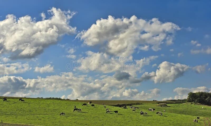 Estate nella Borgogna, Francia Bello giorno soleggiato nei campi della Francia fotografia stock