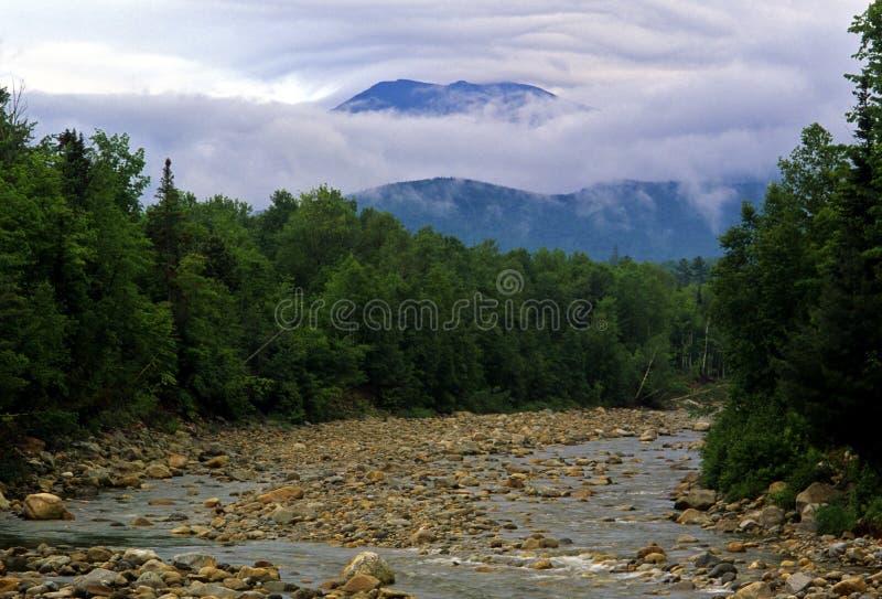 Download Estate nella foresta fotografia stock. Immagine di bianco - 3886226