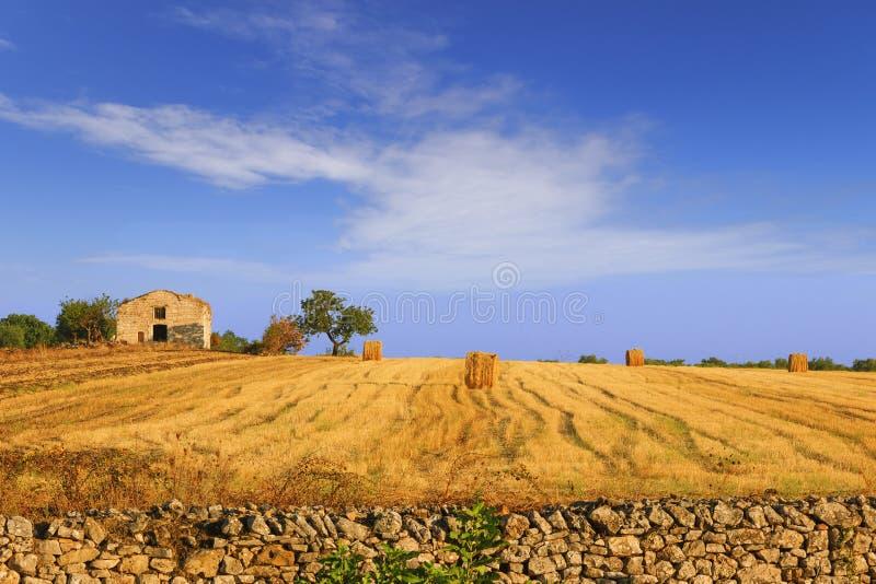 Estate paesaggio rurale campo raccolto con le balle di for Piani di casa di balla di fieno