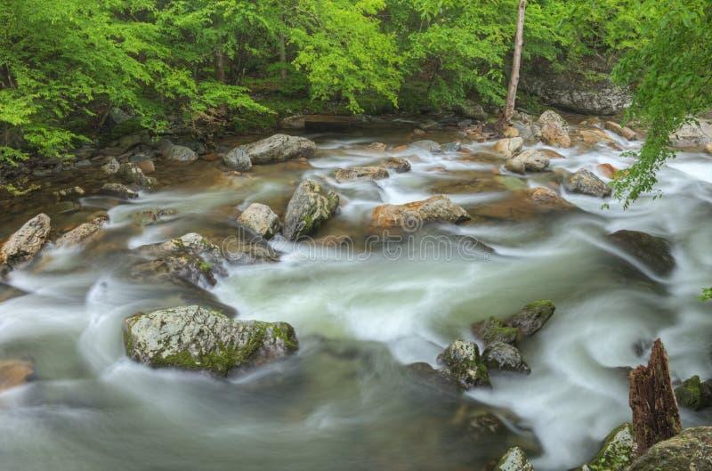 Estate, pochi Rapids del fiume immagine stock