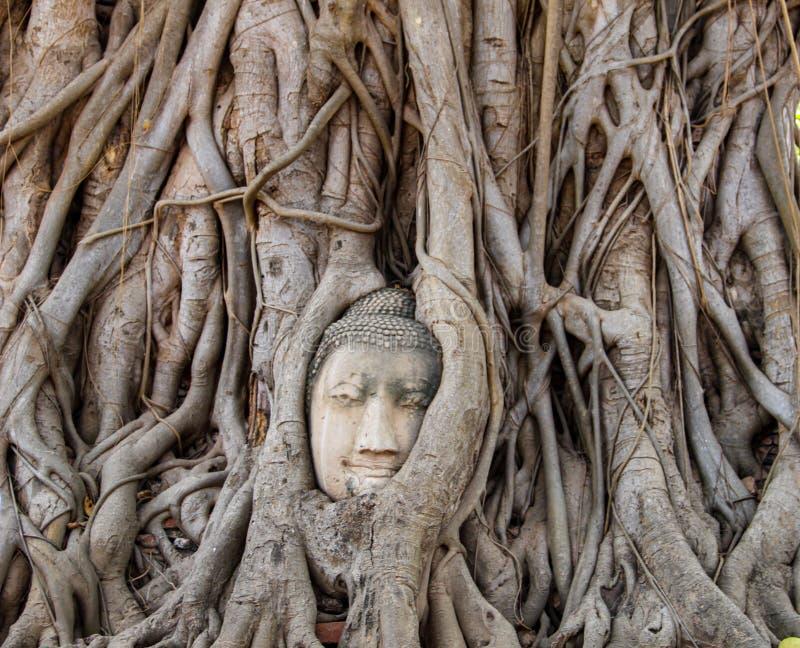 Estatua antigua de la cabeza de Buda en Ayutthaya, Tailandia fotos de archivo