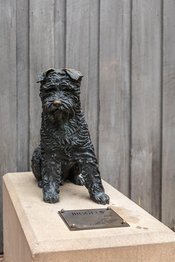 Estatua de bronce de Biggles, un Schnauzer, Sydney Australia foto de archivo libre de regalías