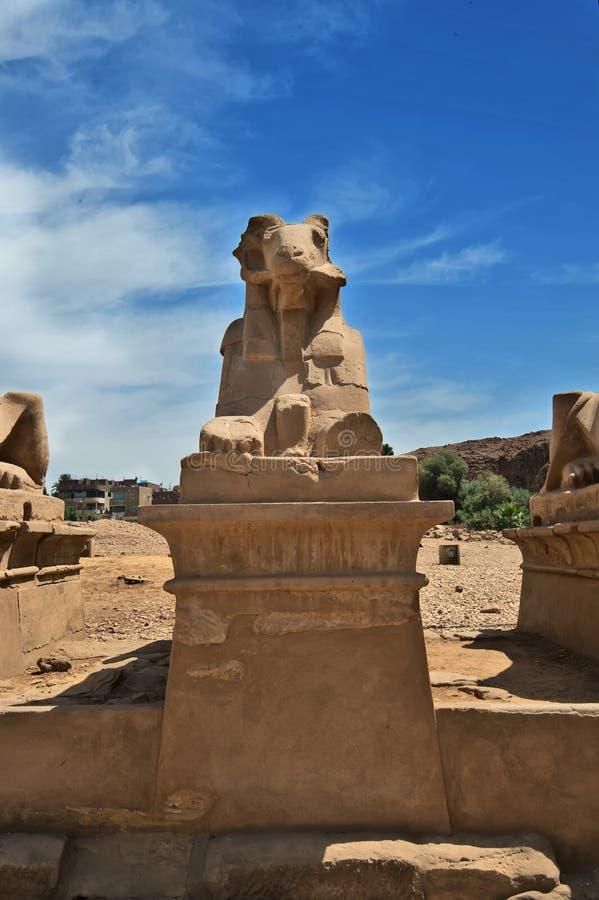 Estatua de Egipto antiguo de la esfinge en templo del karnak de Luxor fotografía de archivo libre de regalías