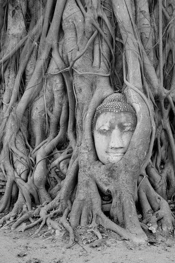 Estatua de la cabeza de Buda fotos de archivo libres de regalías