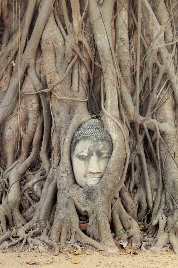 Estatua de la cabeza de Buda imagen de archivo