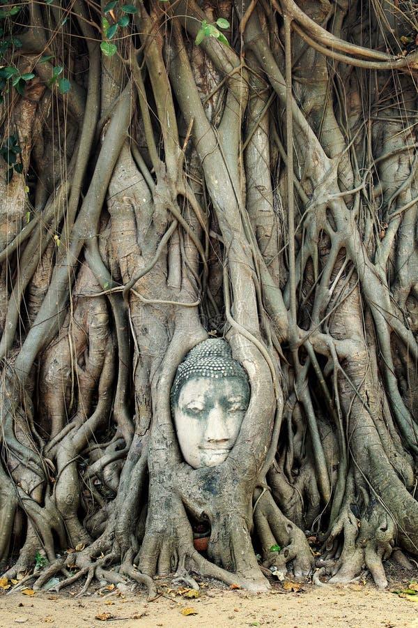 Estatua de la cabeza de Buda fotos de archivo