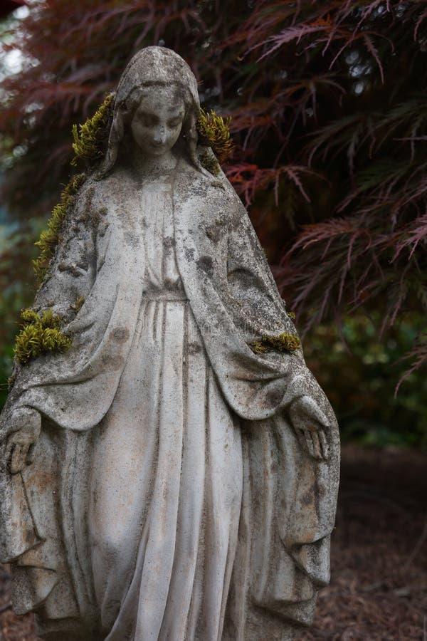Estatua de la Virgen María, cubierta con el musgo delante de un árbol de arce rojo fotografía de archivo