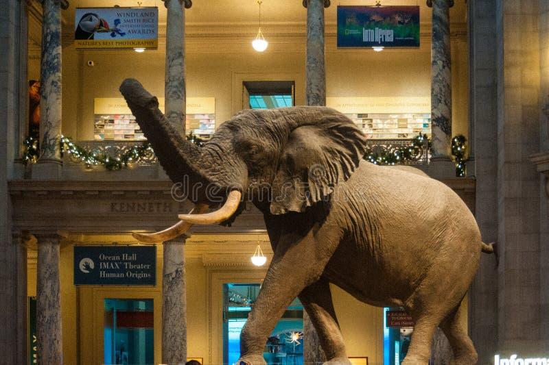 Estatua de un elefante imagenes de archivo