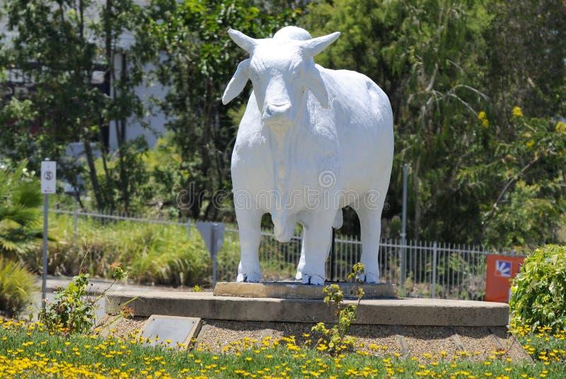 Estatua del toro australiano del brahmán en Rockhampton, Australia imagenes de archivo