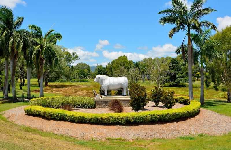 Estatua del toro de Romagnola en Rockhampton, Australia fotos de archivo libres de regalías