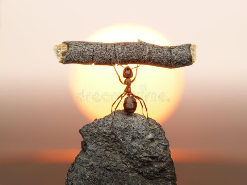 Estatua del trabajo, civilización de las hormigas foto de archivo