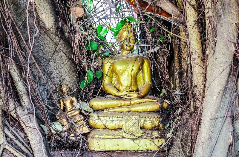 Estatuas antiguas de oro de Buda debajo del árbol fotografía de archivo libre de regalías