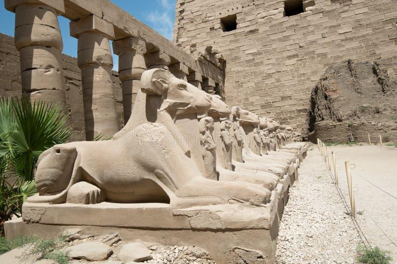 Estatuas de Egipto antiguo de la esfinge en templo del karnak de Luxor imágenes de archivo libres de regalías