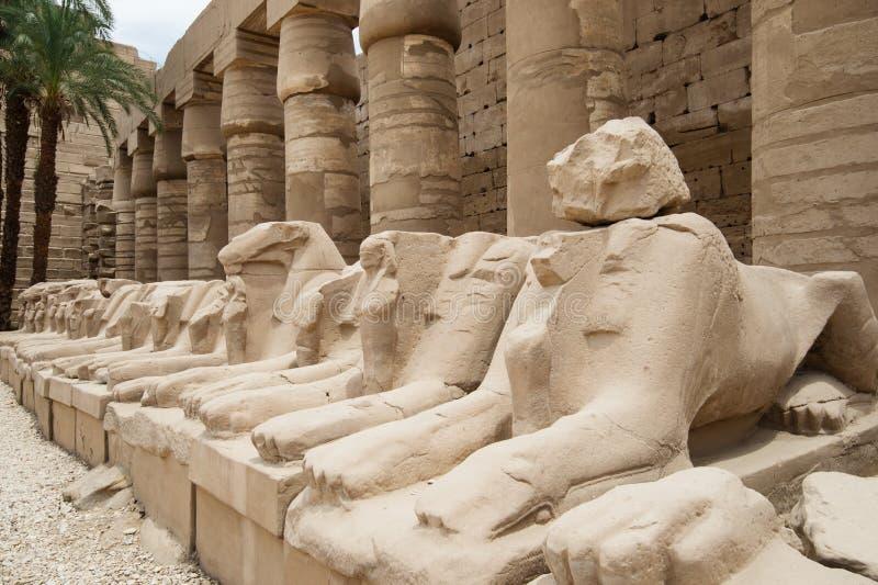 Estatuas de Egipto antiguo de la esfinge en templo del karnak de Luxor fotografía de archivo libre de regalías