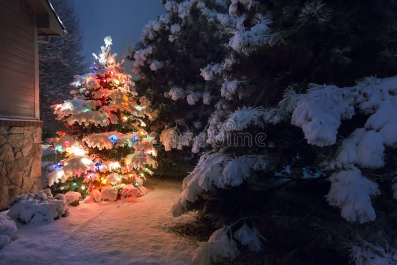 Este árbol de navidad nevado se destaca brillantemente contra los tonos azul marino de la luz de la última tarde en este sce de l imágenes de archivo libres de regalías