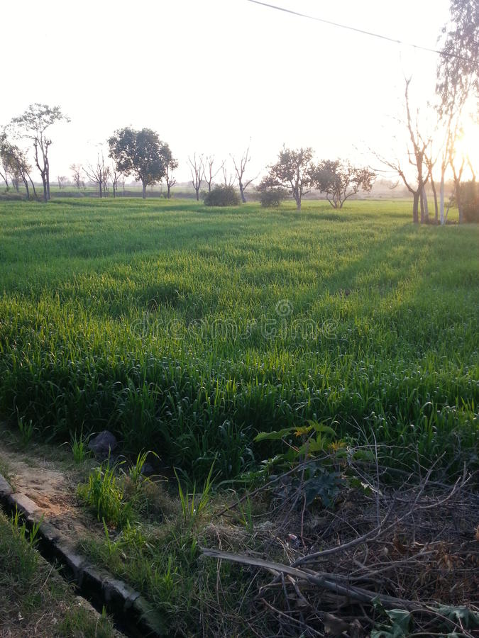 Este é campos bonitos de Paquistão foto de stock
