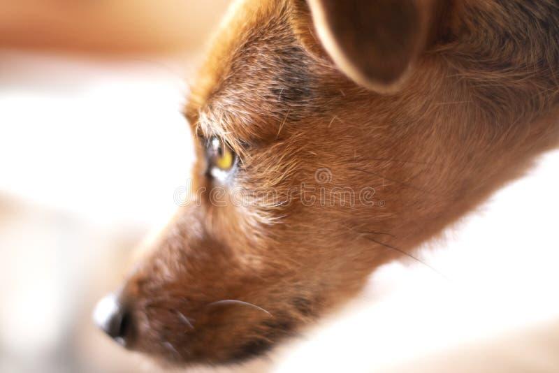 Este cão bonito quer algo, mas você não conhece que imagens de stock