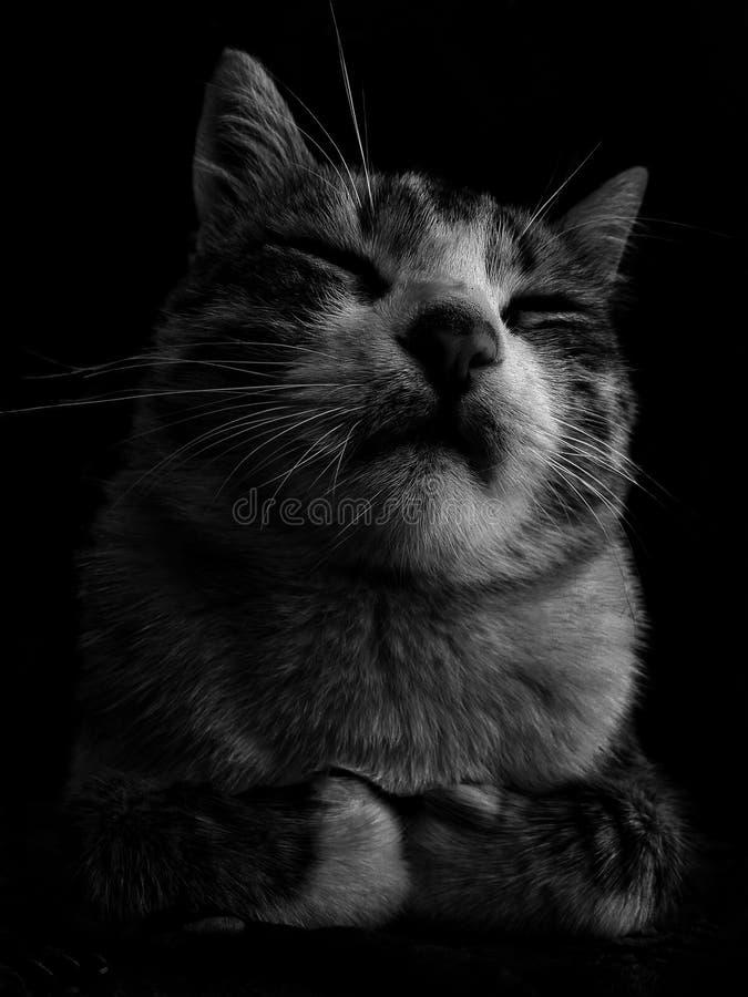 este gato é furado muito mas eu amo-o foto de stock