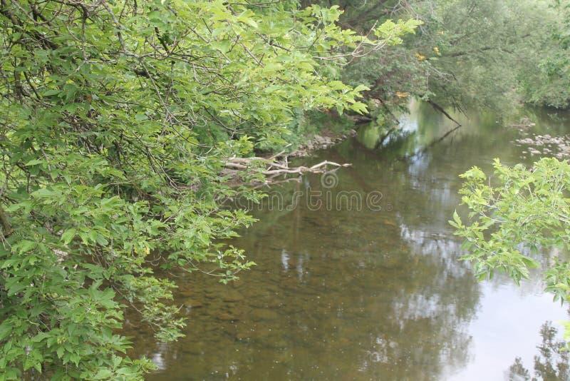 Este ponto no rio pertence aos patos fotografia de stock royalty free