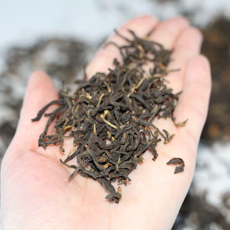 Este té chino Una dispersión del té seco Se secan las hojas imagen de archivo