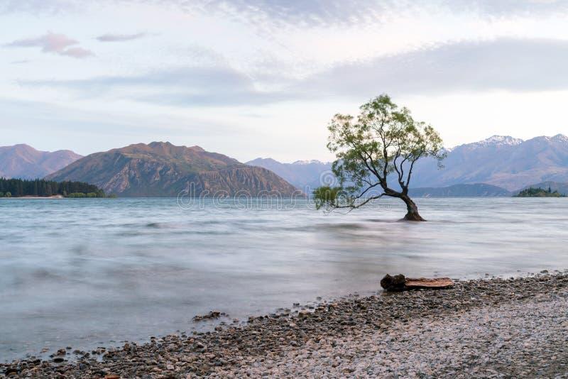 Esteja a árvore sozinha de Wanaka no lago da água fotos de stock royalty free