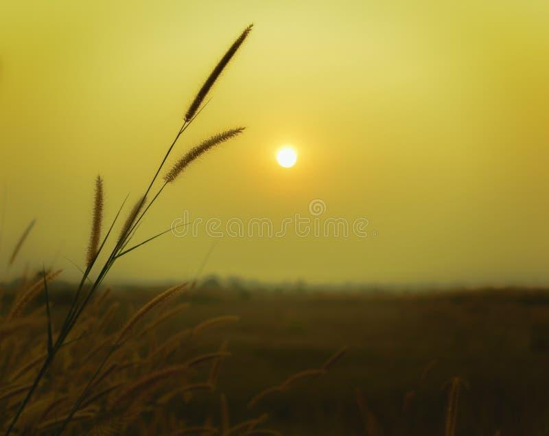 Esteja para fora o int o sol fotografia de stock