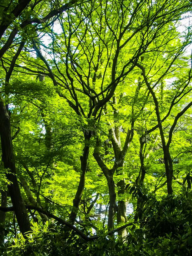 Estela del bosque verde imagenes de archivo