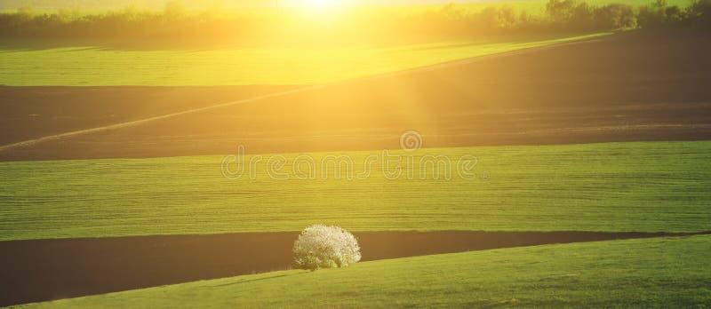Estensione della primavera dei campi fotografie stock