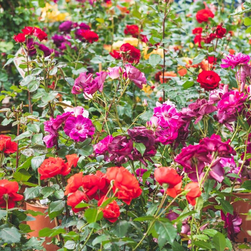 Estensione variopinta dei fiori della molla ad un mercato locale fotografia stock libera da diritti